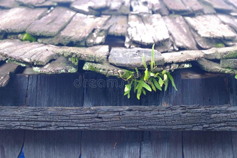 Herbe verte s'élevant dans le toit d'une maison faite de bois photo libre de droits