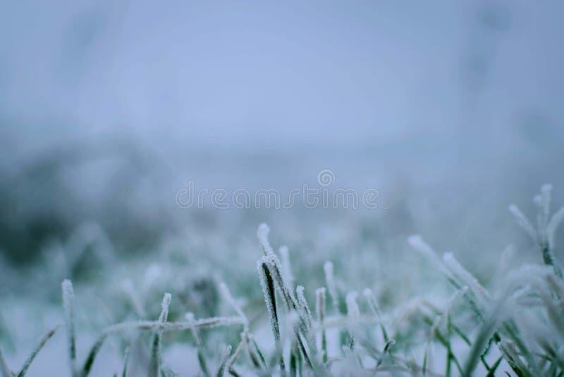 Herbe verte sous la neige images stock