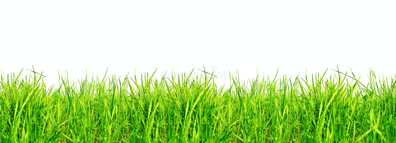 Herbe verte sur le blanc photo stock