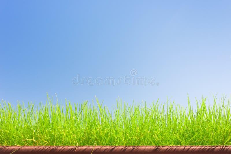 Herbe verte sur le fond de ciel bleu photos libres de droits