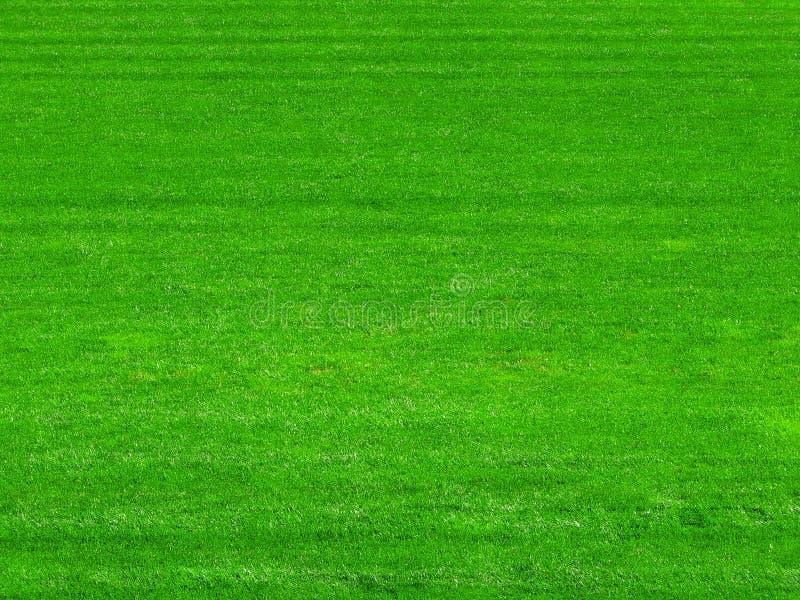 Herbe verte sur le fond de terrain de football photographie stock libre de droits
