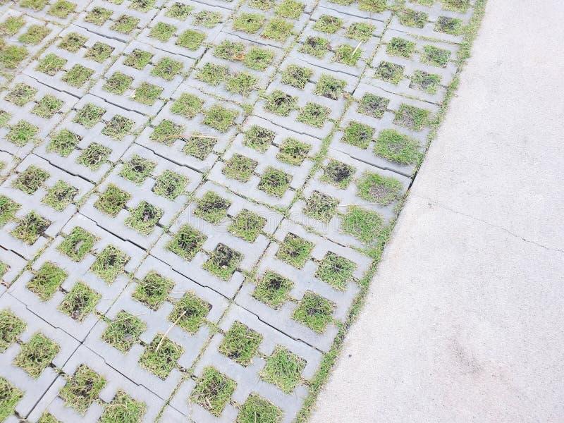 Herbe verte sur les briques et le béton photo libre de droits