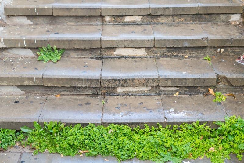 Herbe verte sur les escaliers humides après pluie de ressort photo stock