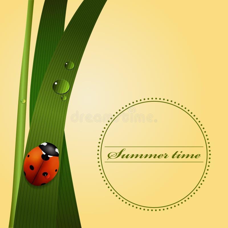 Herbe verte, tige, baisses de rosée, coccinelle mignonne Saison d'été illustration libre de droits
