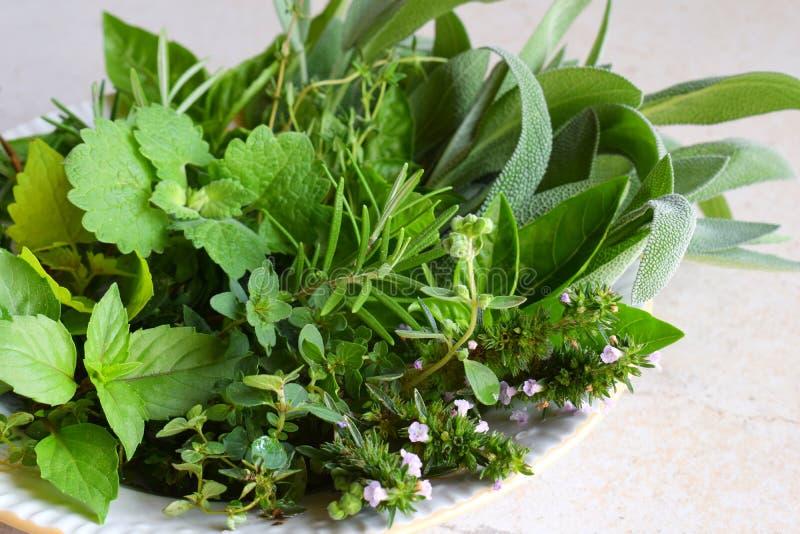 Herbes épicées et médicinales fraîches sur le fond blanc Bouquet de diverse herbe - romarin, origan, sauge, marjolaine, basilic,  photos stock