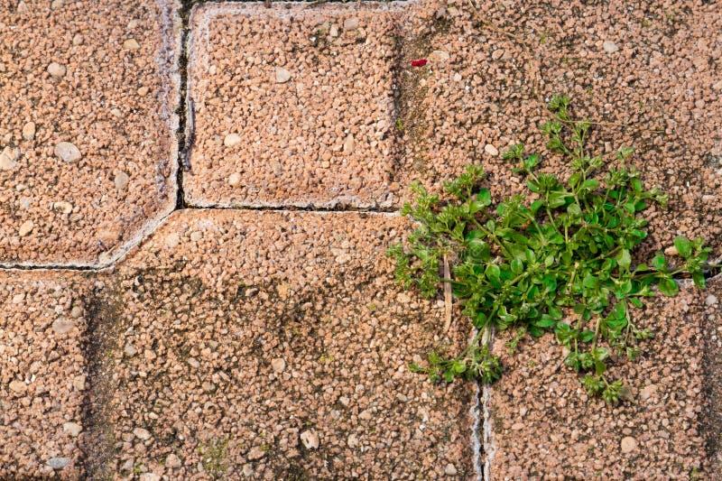 Herbes photo libre de droits