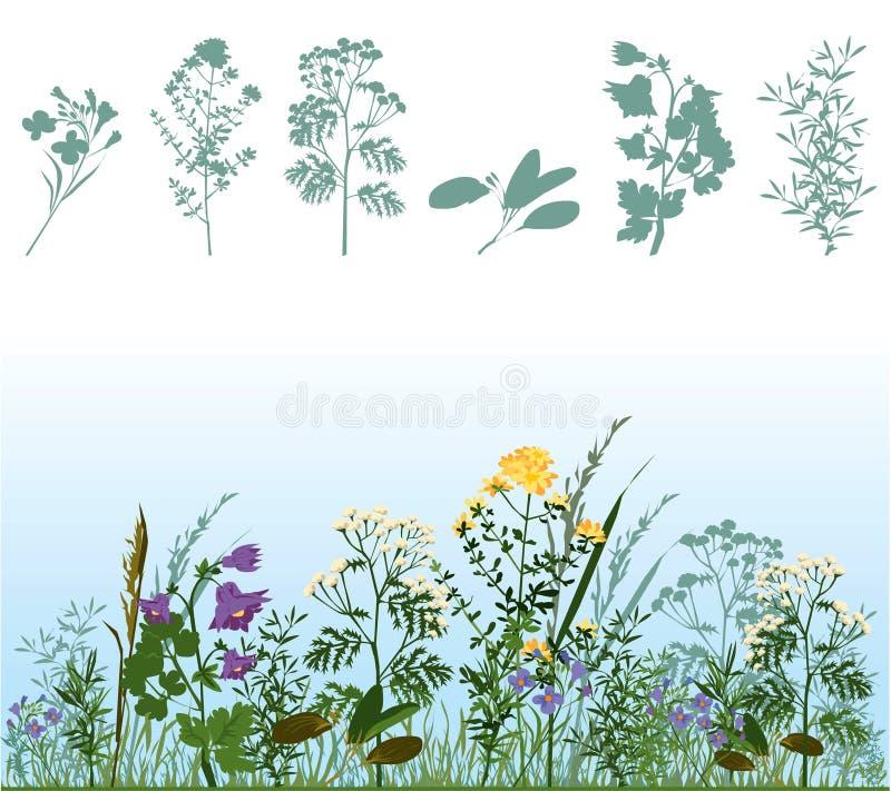 Herbes illustration libre de droits