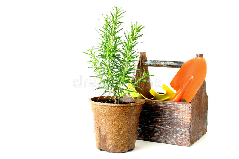 Herbes photo stock