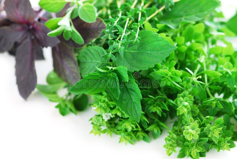 Herbes assorties image stock