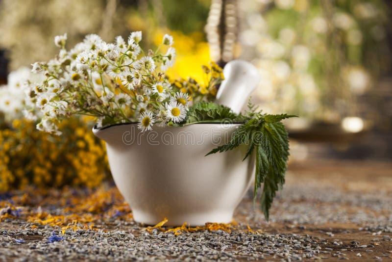 Herbes, baies et fleurs avec le mortier, sur le backgrou en bois de table photos libres de droits