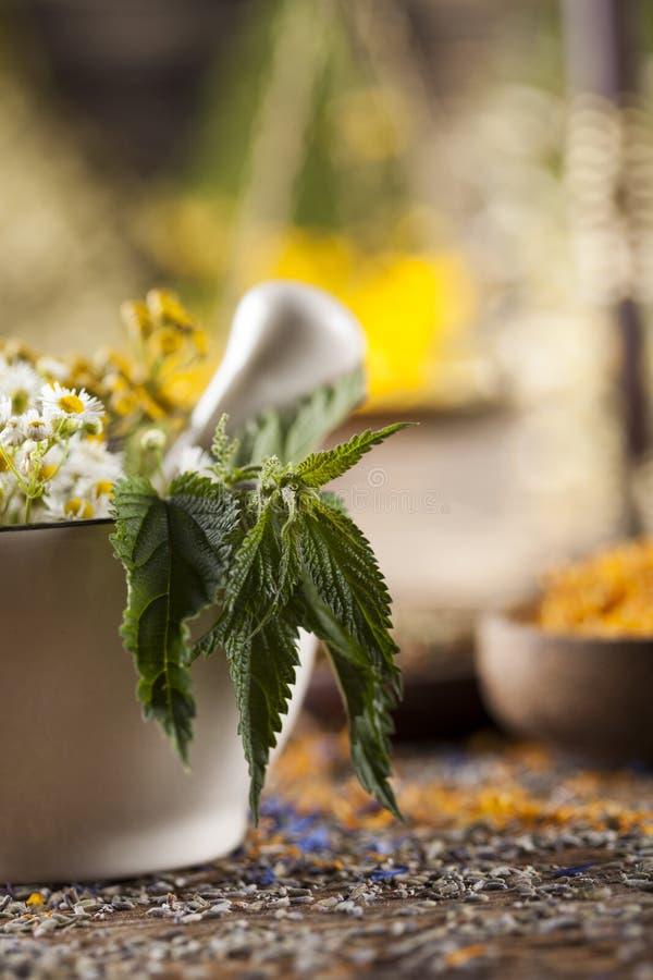 Herbes, baies et fleurs avec le mortier, sur le backgrou en bois de table photographie stock libre de droits