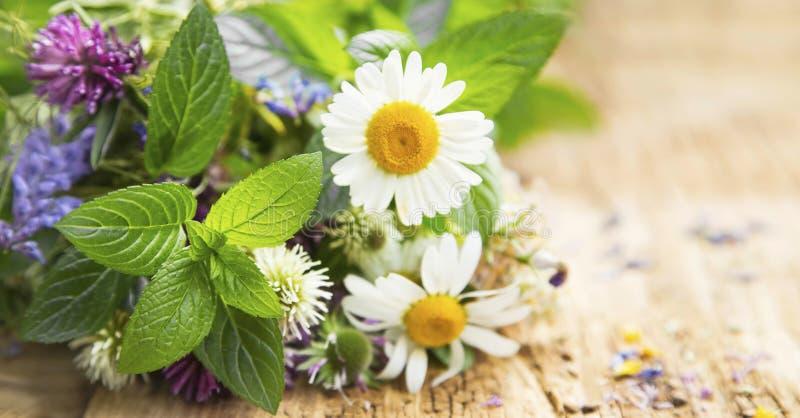 Herbes curatives image libre de droits
