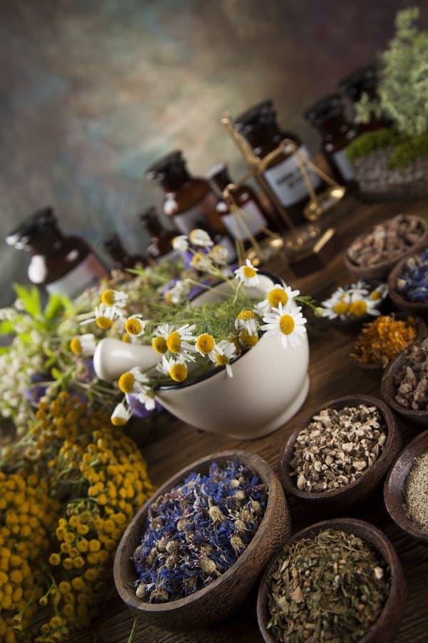 Herbes curatives sur la table, le mortier et la phytothérapie en bois image libre de droits