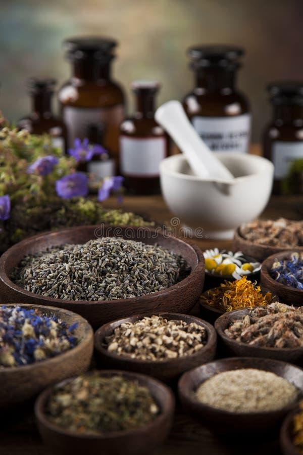 Herbes curatives sur la table, le mortier et la phytothérapie en bois photo libre de droits