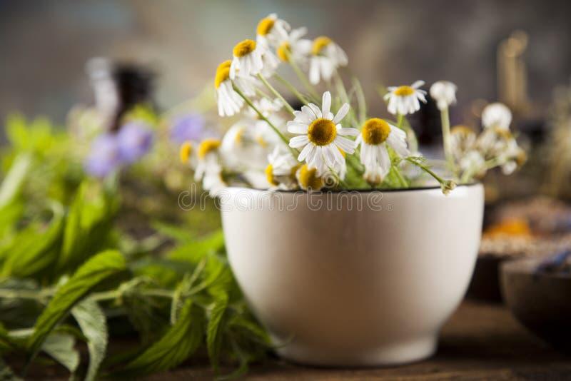 Herbes curatives sur la table, le mortier et la phytothérapie en bois photo stock