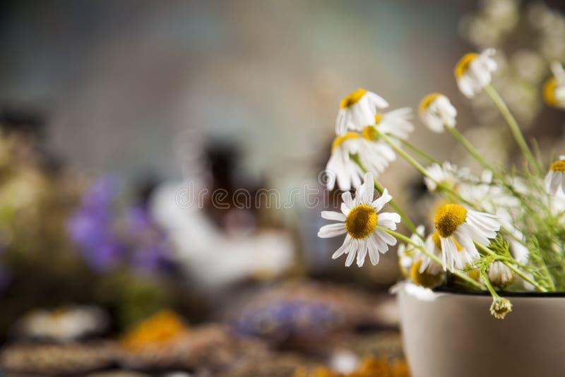 Herbes curatives sur la table, le mortier et la phytothérapie en bois photographie stock