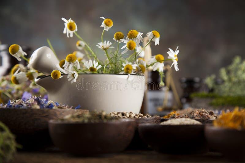 Herbes curatives sur la table, le mortier et la phytothérapie en bois photographie stock libre de droits