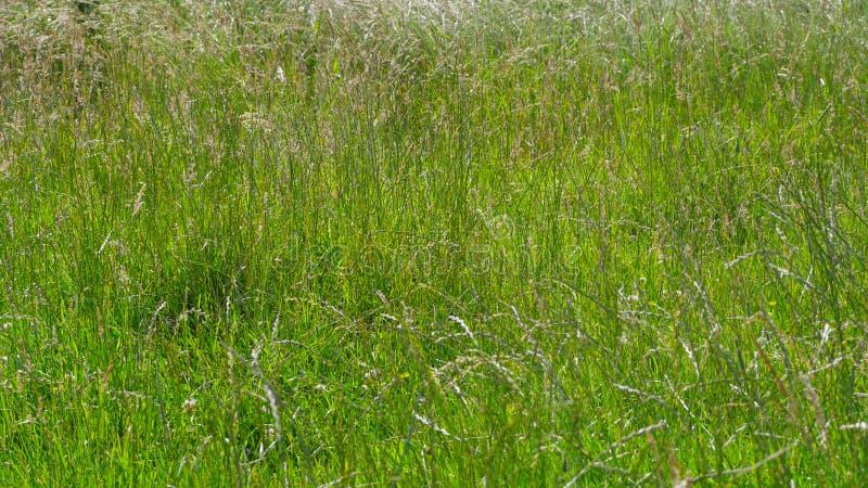 Herbes d'été sur Hampstead Heath, Londres images stock