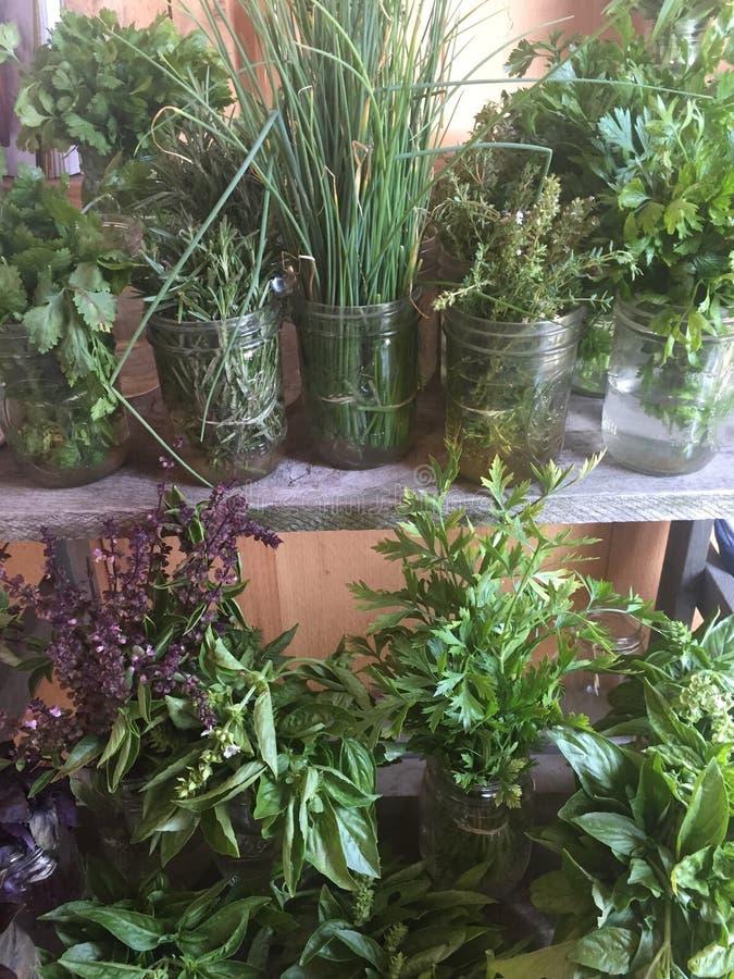 Herbes dans des pots photo stock