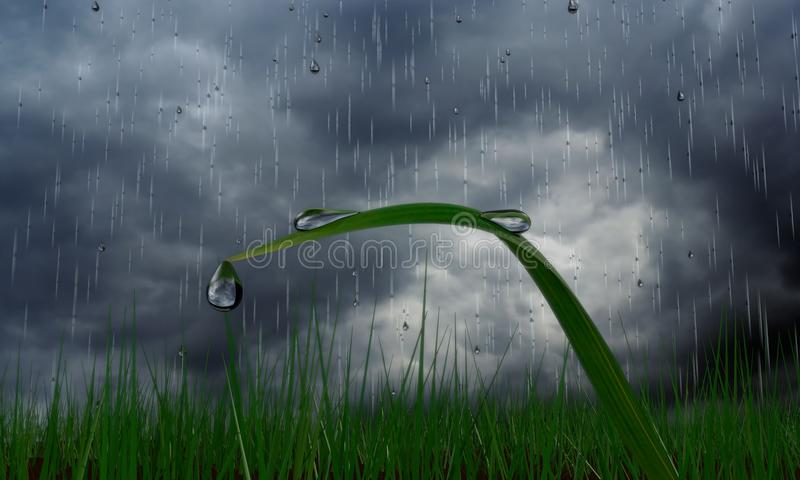 herbes de baisse de pluie image stock