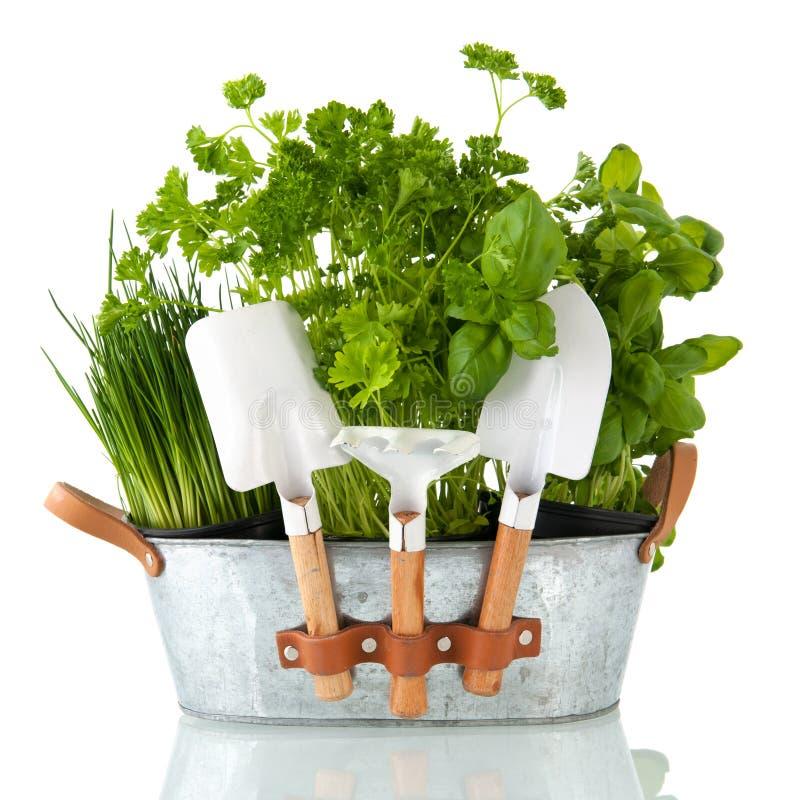 Herbes de cuisine image libre de droits