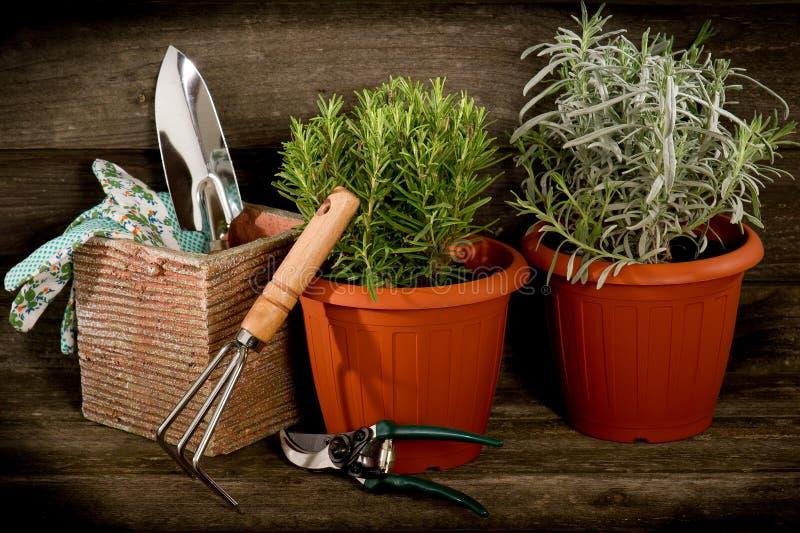 Herbes de jardin sur le bac photographie stock libre de droits