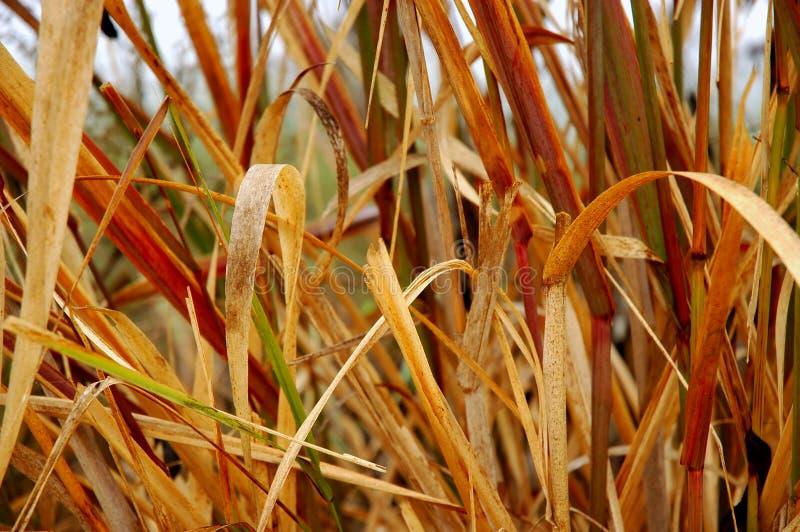 Herbes de marais photo stock