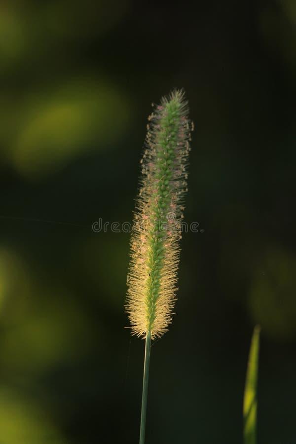 herbes de pluie de mousson photos stock