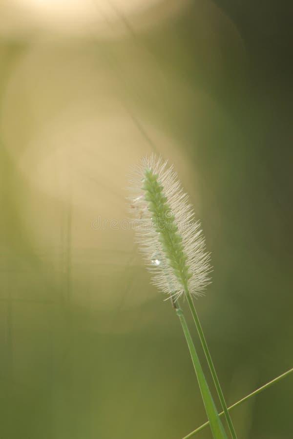 herbes de pluie de mousson photos libres de droits