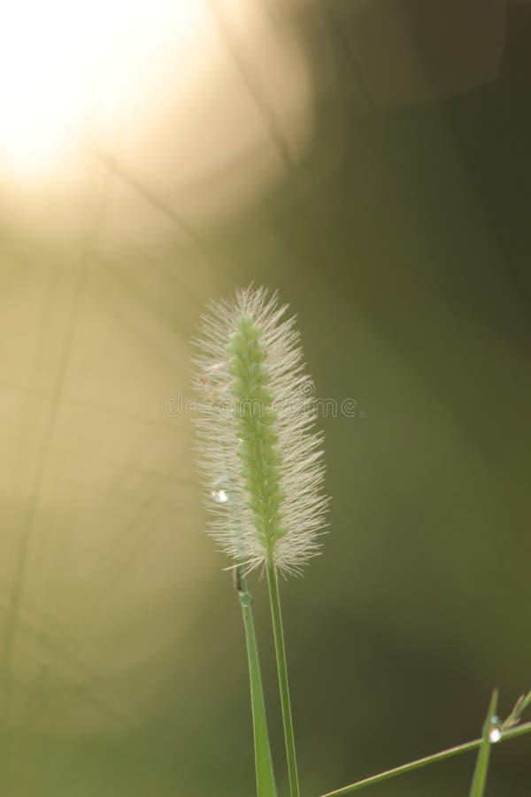herbes de pluie de mousson photographie stock libre de droits