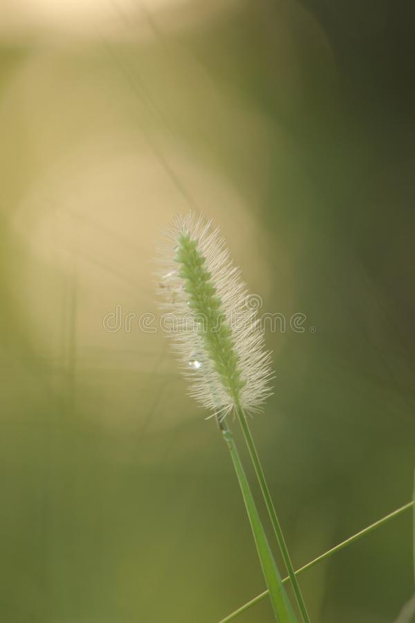 herbes de pluie de mousson photo libre de droits