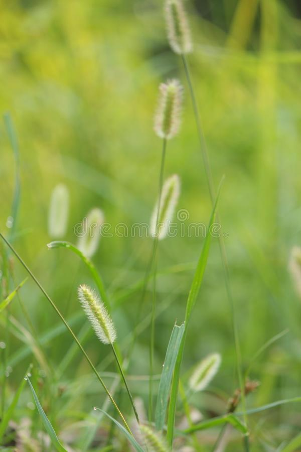 herbes de pluie de mousson photographie stock