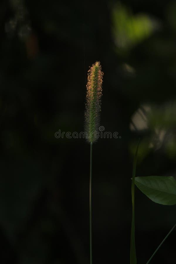 herbes de pluie de mousson image stock