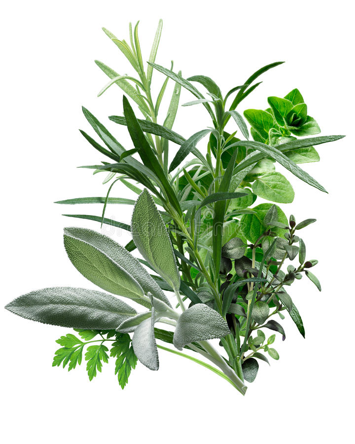 Herbes de Provence (combinação de ervas) fotos de stock royalty free