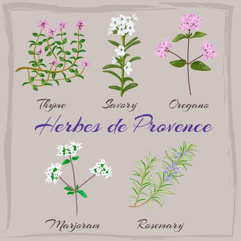 Herbes de Provence Tomillo, sabroso, orégano, mejorana, stock de ilustración