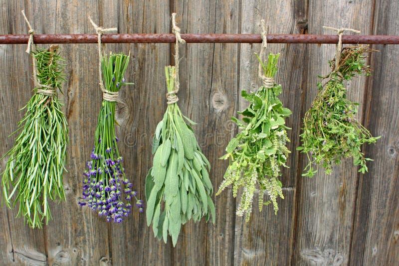 Herbes de séchage photographie stock
