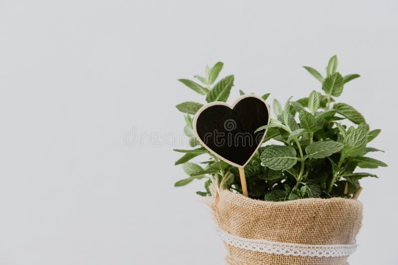 Herbes en bon état d'usine dans le pot de toile de jute photographie stock libre de droits
