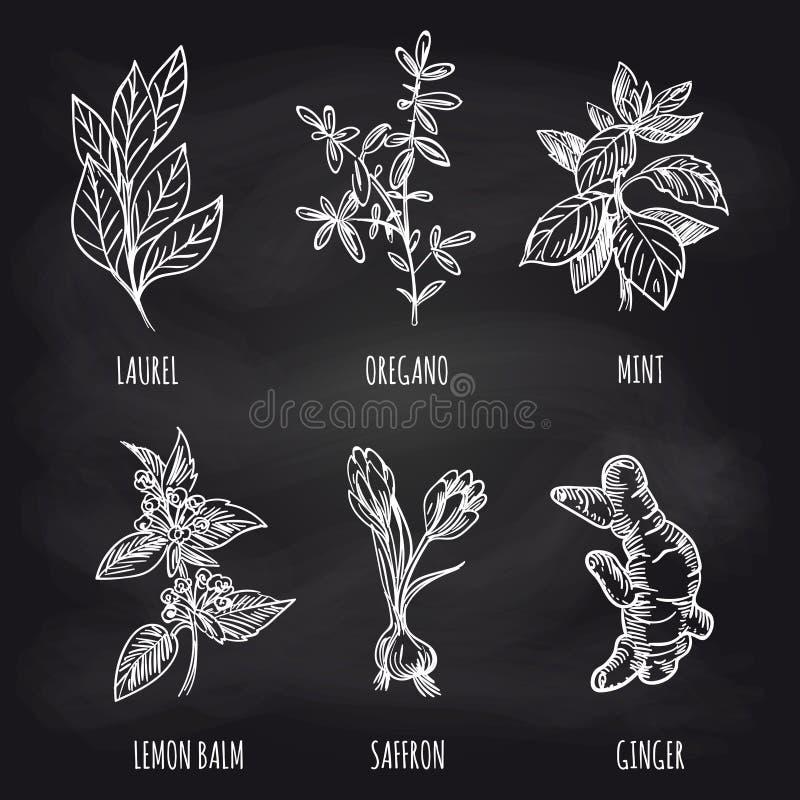 Herbes et épice sur le tableau noir illustration stock