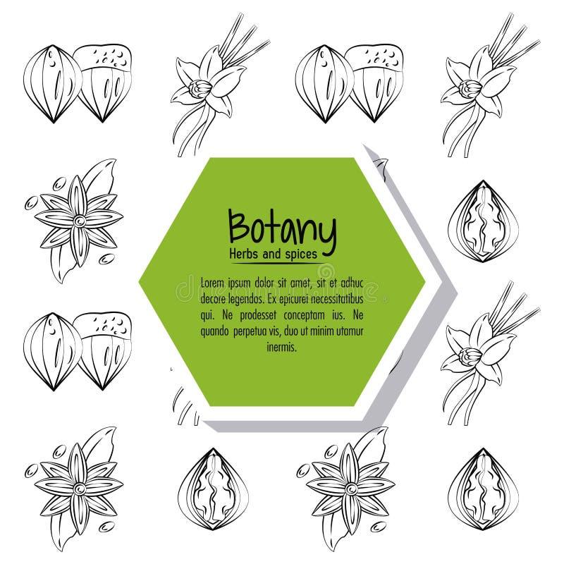 Herbes et épices de botanique illustration stock