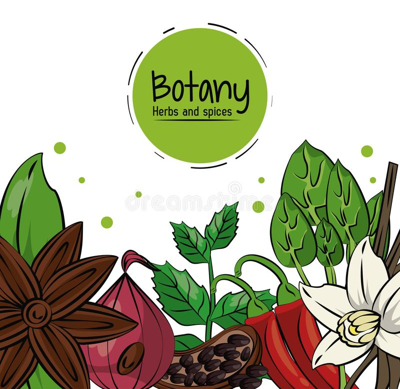 Herbes et épices de botanique illustration libre de droits