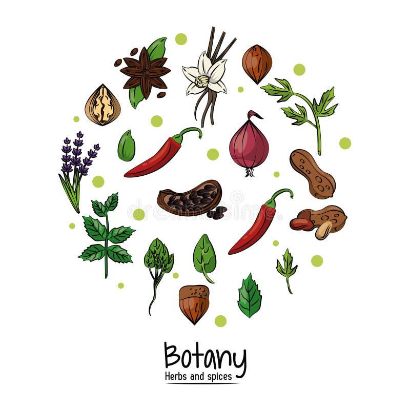 Herbes et épices de botanique illustration de vecteur
