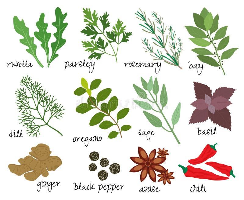 Herbes et épices de vecteur illustration libre de droits