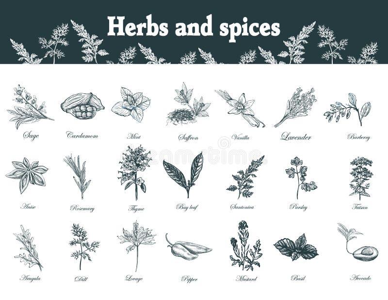 Herbes et épices réglées Plantes médicinales d'officinale tiré par la main ou illustration de vecteur