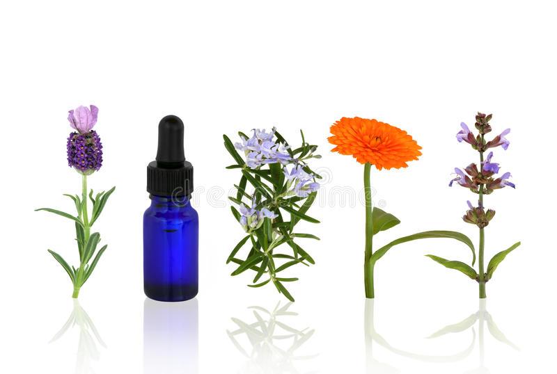 Herbes et fleurs d'Aromatherapy image stock