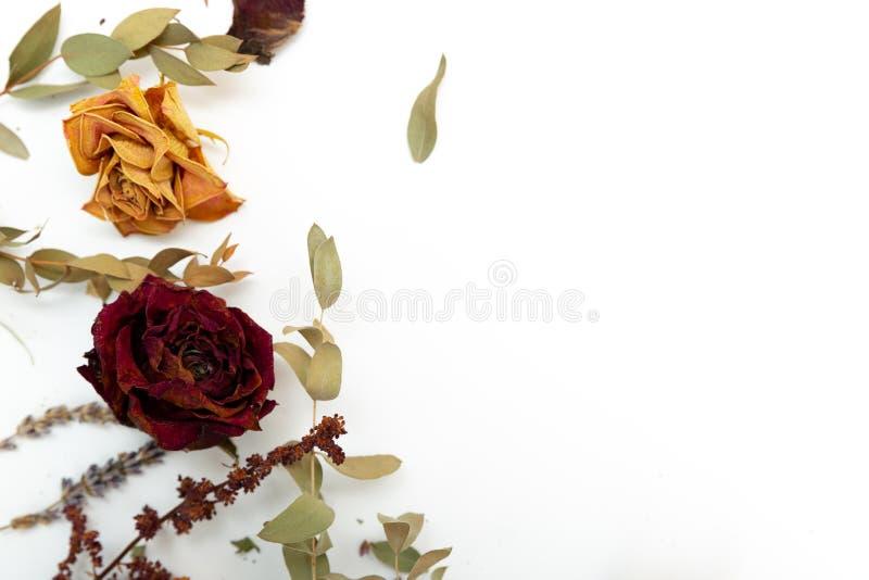 Herbes et fleurs sèches, rose, lavande, eucalyptus sur le fond blanc Copiez l'espace images stock