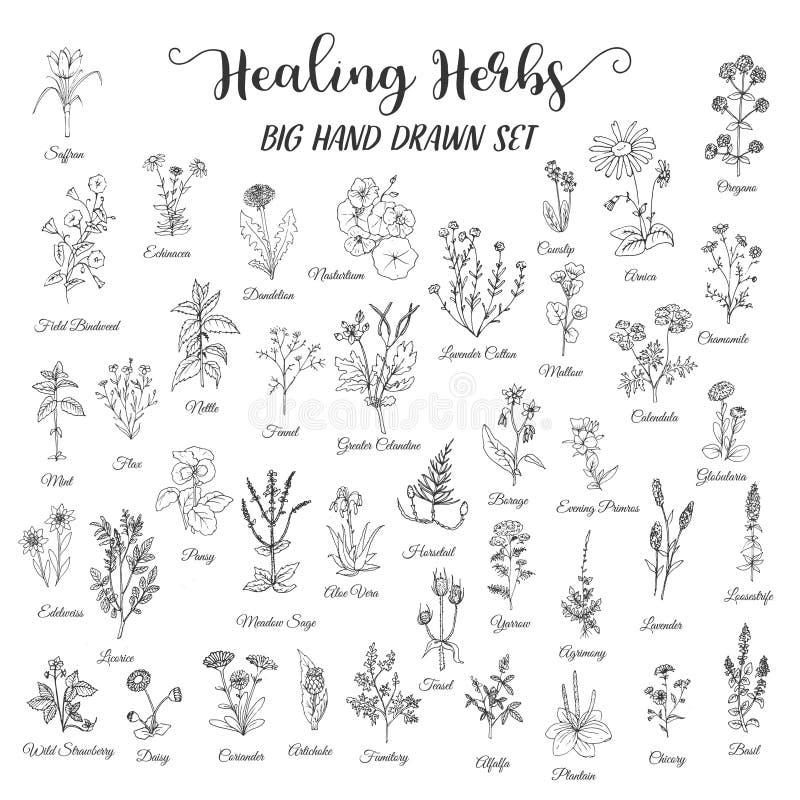 Herbes et fleurs sauvages illustration libre de droits