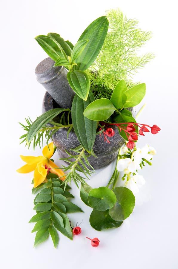 Herbes et mortier photo stock
