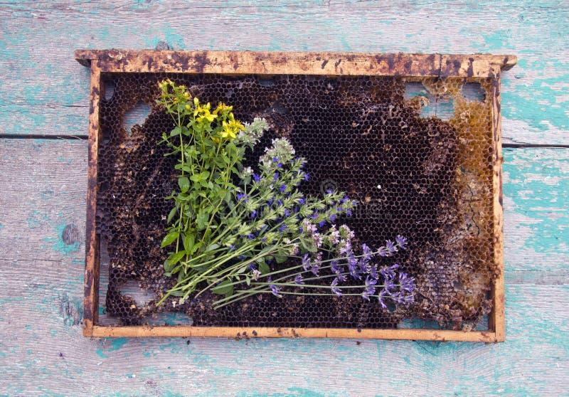 Herbes et nid d'abeilles sur le fond en bois rustique images libres de droits