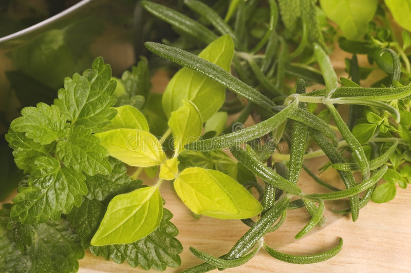 Herbes fraîches. photos libres de droits