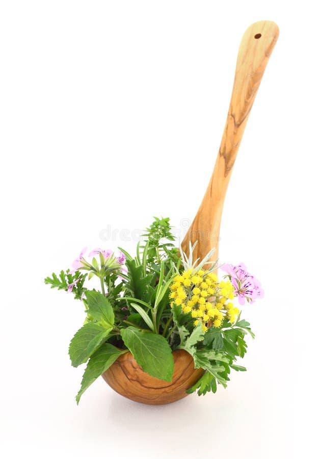 Herbes fraîches photo stock